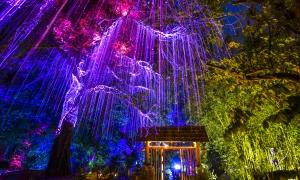 Avatar Secret Garden